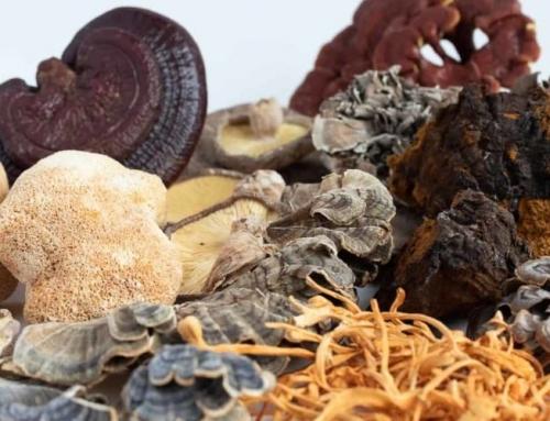 September is Mushroom and Manuka Honey Month!